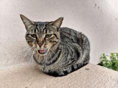 Kot w Rodos